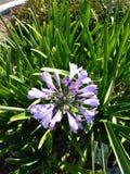 Kalifornia palmy Zdjęcia Royalty Free