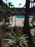 Kalifornia palmy Zdjęcie Stock