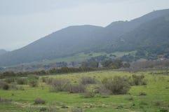 Kalifornia ptaki Zdjęcie Royalty Free