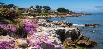Kalifornia purpury Obraz Stock