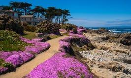 Kalifornia purpury Fotografia Royalty Free