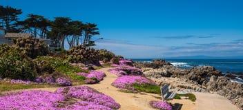 Kalifornia purpury Obrazy Stock