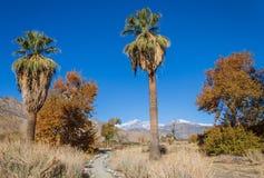 Kalifornia pustyni krajobrazu ślad w jesieni fotografia stock