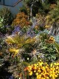 Kalifornia wybrzeża flowerbeds Obraz Royalty Free