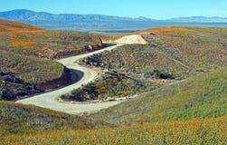 Kalifornia Złoci maczki i purpurowa mędrzec w wysokiej pustyni południowy Kalifornia Fotografia Stock