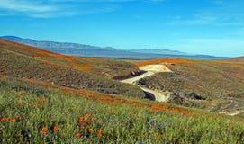 Kalifornia Złoci maczki i purpurowa mędrzec w wysokiej pustyni południowy Kalifornia Zdjęcie Stock