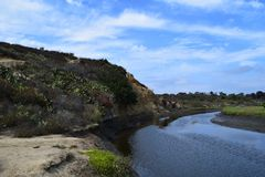 Kalifornia zatoka - Newport zatoki Conservancy Zdjęcia Stock