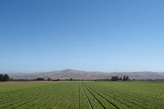 Kalifornien-Bauernhofszene Lizenzfreies Stockfoto