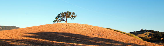 Kalifornien dalek i plogade fält under blå himmel i Paso Robles vinland i centrala Kalifornien USA Arkivbilder