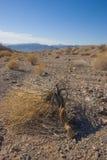 Kalifornien Death Valley nationalpark, torrt träd Arkivbild