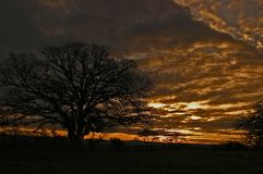 Kalifornien-Eiche bei Sonnenuntergang Stockbilder