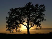 Kalifornien-Eichen-Gebirgssonnenuntergang Stockfoto
