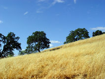 Kalifornien-Hügel lizenzfreie stockfotografie