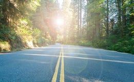 Kalifornien huvudväg till och med skoglandskap med solljusbakgrund Arkivfoto