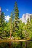Kalifornien 2007 januari nationalpark tagna USA yosemite Fotografering för Bildbyråer
