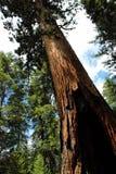 Kalifornien 2007 januari nationalpark tagna USA yosemite Arkivfoto