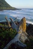 Kalifornien-Küste Lizenzfreies Stockbild