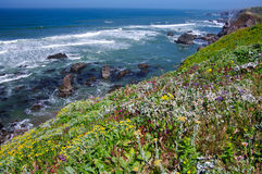 Kalifornien-Küste im Juni Stockbilder