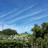 Kalifornien kaktus Arkivbilder