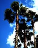 Kalifornien kort Arkivbilder