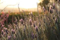 Kalifornien kust- blommor Arkivbild