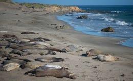 Kalifornien kust med elefantskyddsremsor Arkivfoto