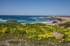 Kalifornien kustlandskap och vildblommor Royaltyfri Foto