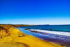 Kalifornien kustlinje på San Simeon arkivbilder