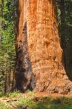 Kalifornien nationalparksequoia USA Arkivbild