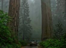 Kalifornien nationalparksequoia USA royaltyfri foto