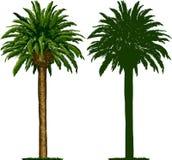 Kalifornien-Palme und Schattenbild Lizenzfreies Stockfoto