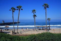 Kalifornien-Palmen stockfotografie