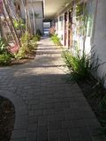 Kalifornien-Palmen Stockfotos
