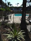Kalifornien-Palmen Stockfoto
