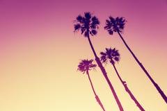 Kalifornien-Palmen bei Sonnenuntergang Lizenzfreies Stockfoto
