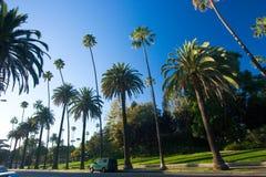 Kalifornien palmträd Fotografering för Bildbyråer