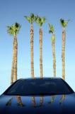 Kalifornien palmträd- och bilreflexion Arkivbild