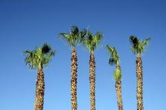 Kalifornien palmträd- och bilreflexion Arkivfoto
