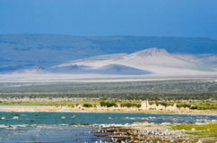Kalifornien placerar den ovanliga laken 2008 mono västra Royaltyfria Foton