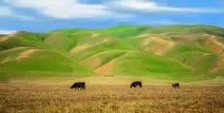 Kalifornien-priaries, blaue Himmel, die Wolken türmen, üppige grüne Rolling Hills und goldene Felder, um an weiden zu lassen lizenzfreie stockbilder