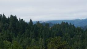 Kalifornien redwoodträd Fotografering för Bildbyråer