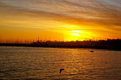 Kalifornien segelbåtar Royaltyfri Bild