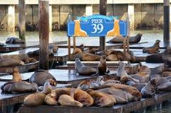 Kalifornien sjölejon på pir 39 på fiskares hamnplats arkivfoto