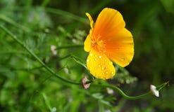 Kalifornien solljus med regndroppar Arkivfoton