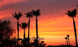 Kalifornien solnedgång Royaltyfria Foton