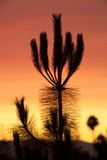 Kalifornien-Sonnenuntergang Lizenzfreies Stockbild