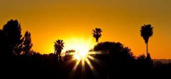 Kalifornien-Sonnenuntergang mit Palmen Stockfotos