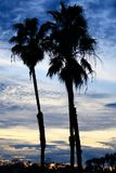 Kalifornien-Sonnenuntergang-Palme-Schattenbild Stockfoto