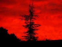 Kalifornien sydlig solnedgång Arkivfoto