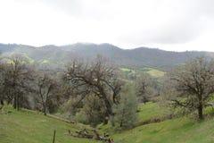 Kalifornien utlöpare nära Glennville Royaltyfria Foton